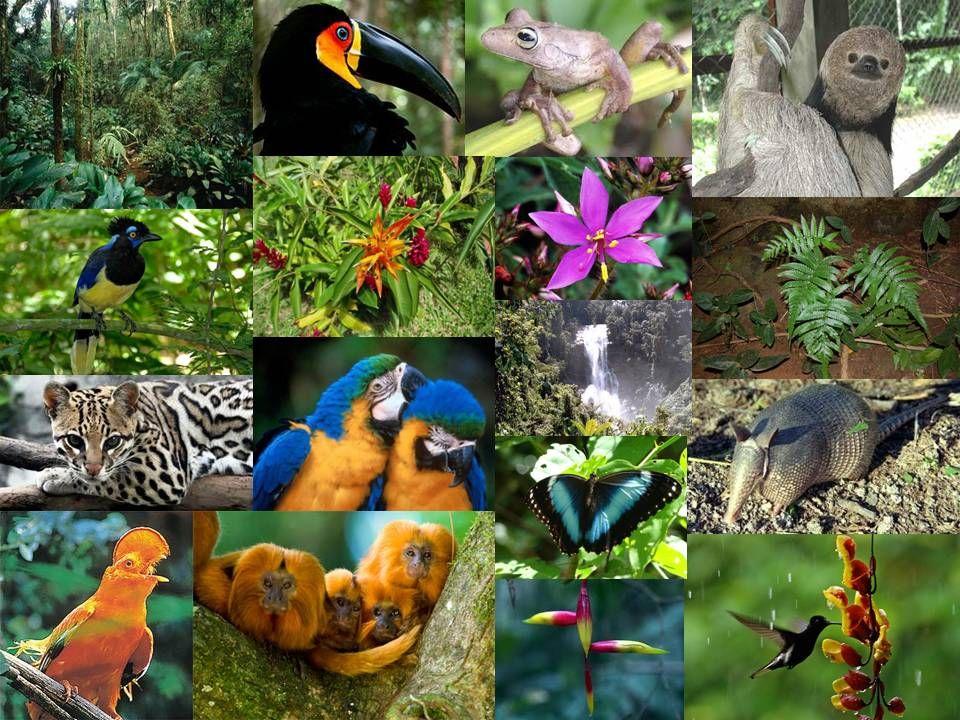 Flora Y Fauna Súbete A Bordo Selva Lacandona Selva Selvas Tropicales