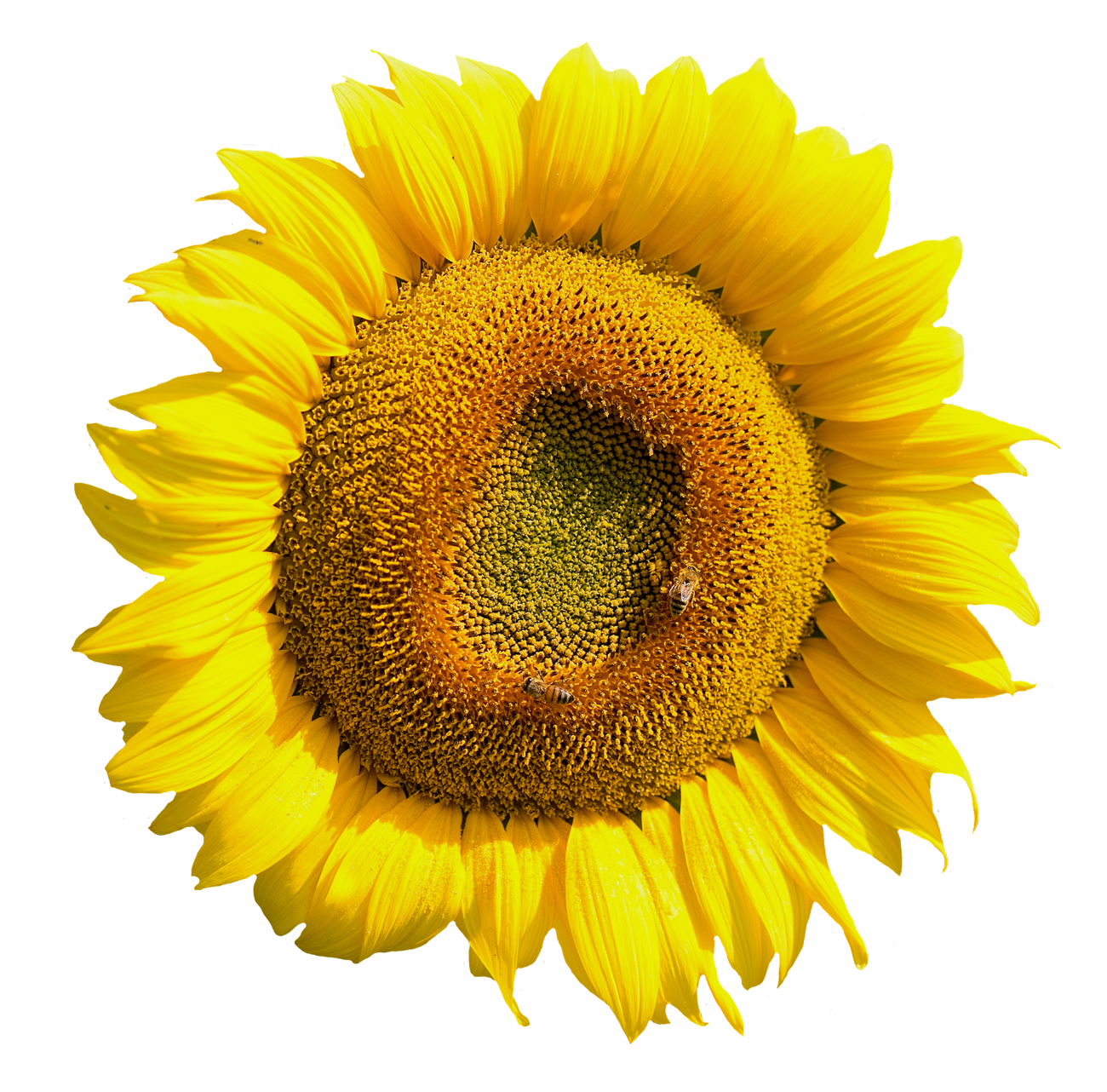 Yellow Sunflower Flower PNG Image Flower png images