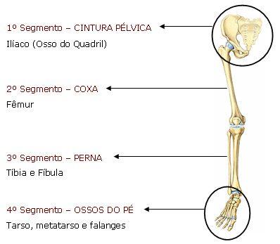 Membro Inferior Com Imagens Aula De Anatomia Tecnico Em