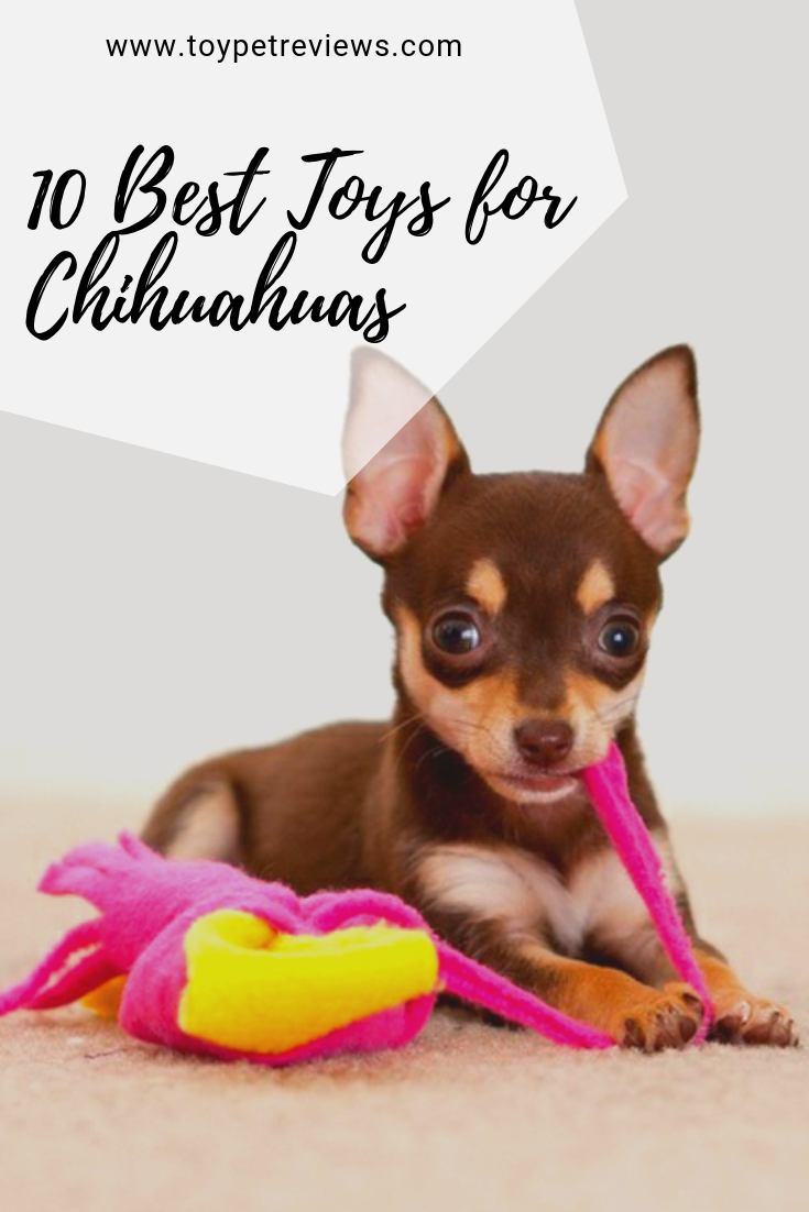 10 Best Toys For Active Chihuahuas 2019 List Best Dog Toys Small Dog Toys Funny Dog Toys