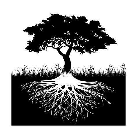 'Tree Roots Silhouette' Art Print - Andrija Markovic   Art.com