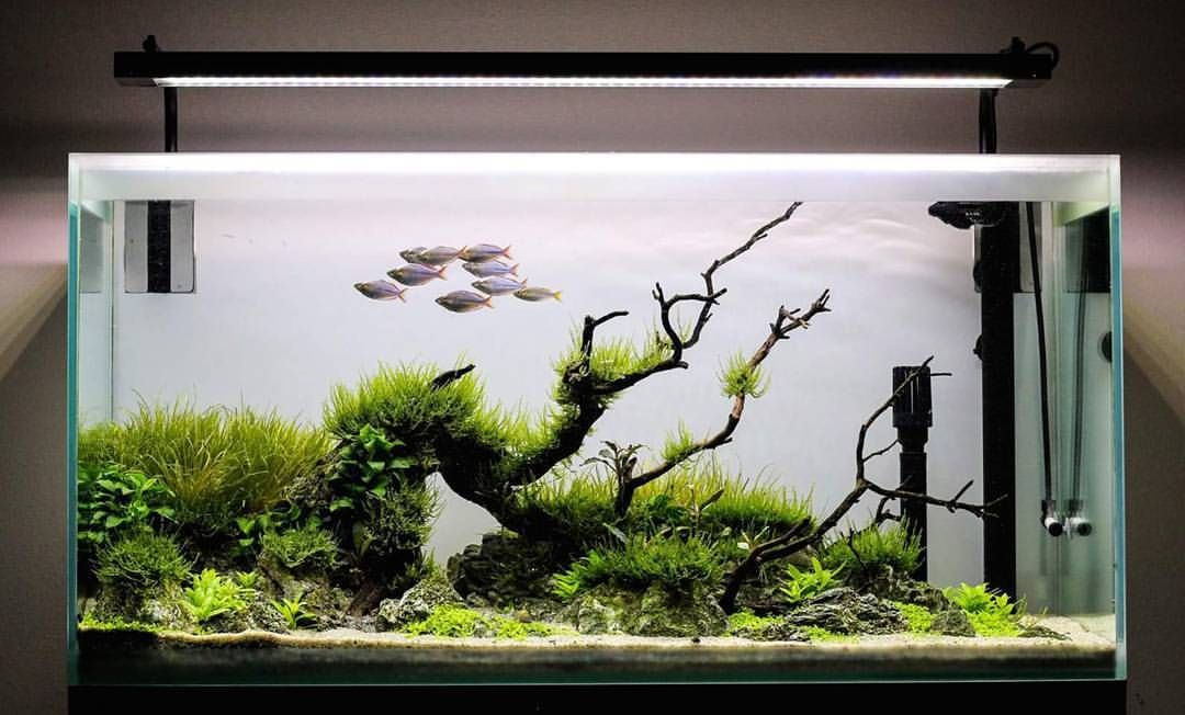 Beautiful Scape Aquascape Aquarium Aqua Aquascaping Wood Gra Aquascape Aquarium Aquascape Betta Aquarium