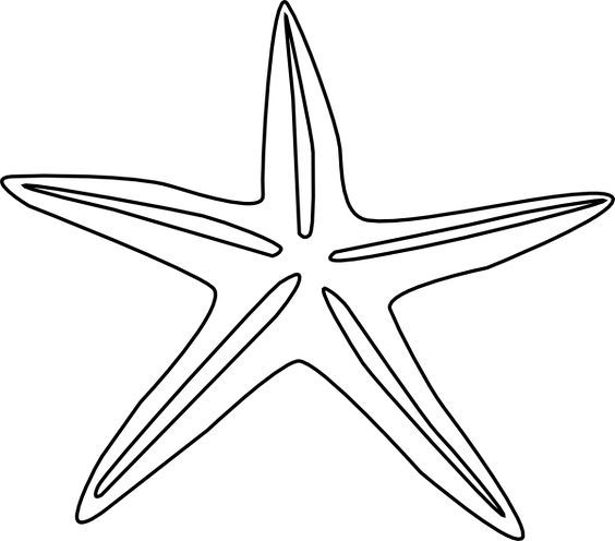 Fish outline starfish. Photos of drawing