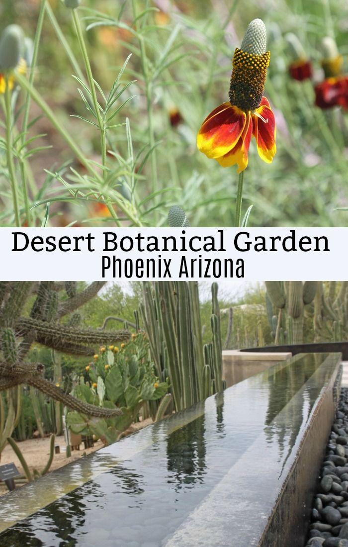 Desert Botanical Garden In Phoenix Arizona Desert