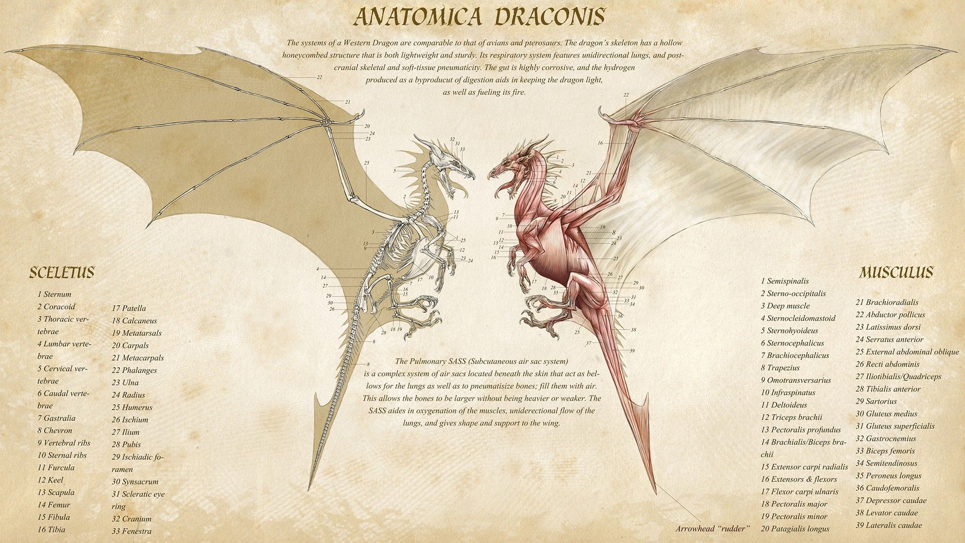 Anatomy Of A Dragon Google Search The Arcane Line Pinterest