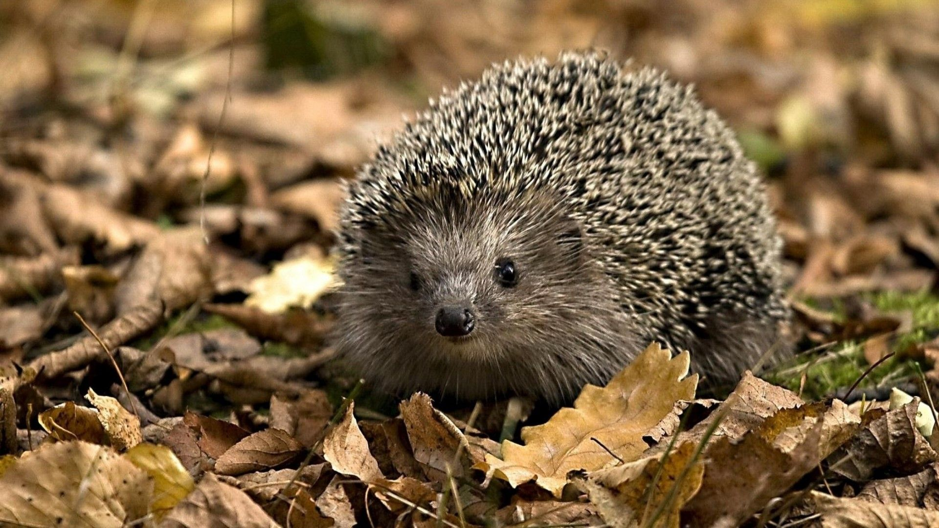 High Definition Animals Wallpapers Phone Animals