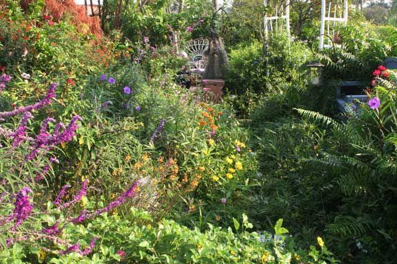 A Butterfly Garden In South Florida Backyard Garden Design Dream Backyard Garden Backyard Garden Layout