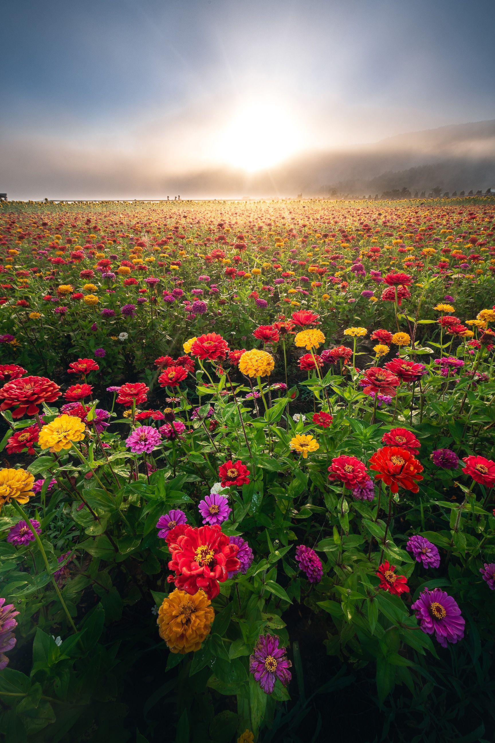 Japan おしゃれまとめの人気アイデア Pinterest 朧 2020 美しい風景写真 綺麗な風景 花の都公園