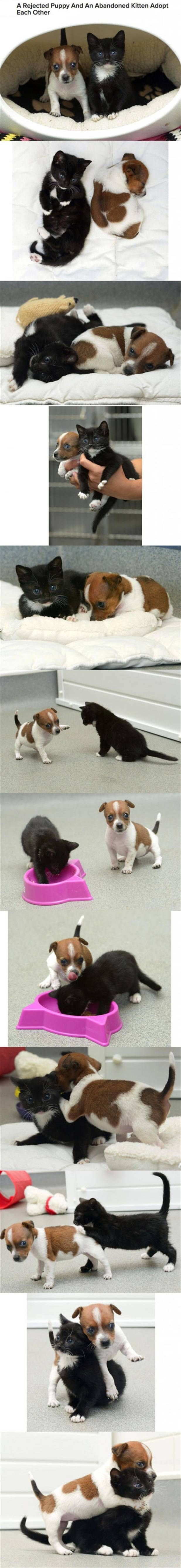 A Rejected Puppy And An Abandoned Kitten Adopt Each Other Baby Animals Cute Animals Animals Beautiful