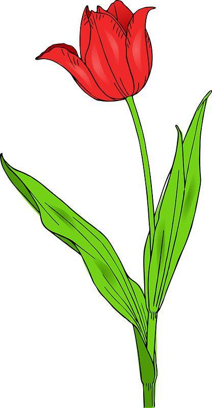 Tulip Flower Love Comprehension Nature Tulip Flower Drawing Flower Clipart Flower Drawing