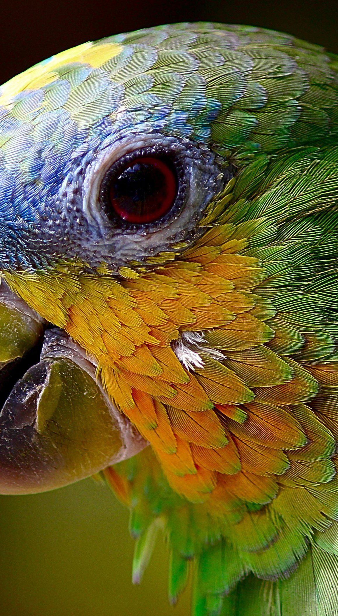 """parrot macaw bird ooooo§u"""" uu†uŠu‡ parrot birds beautiful birds"""