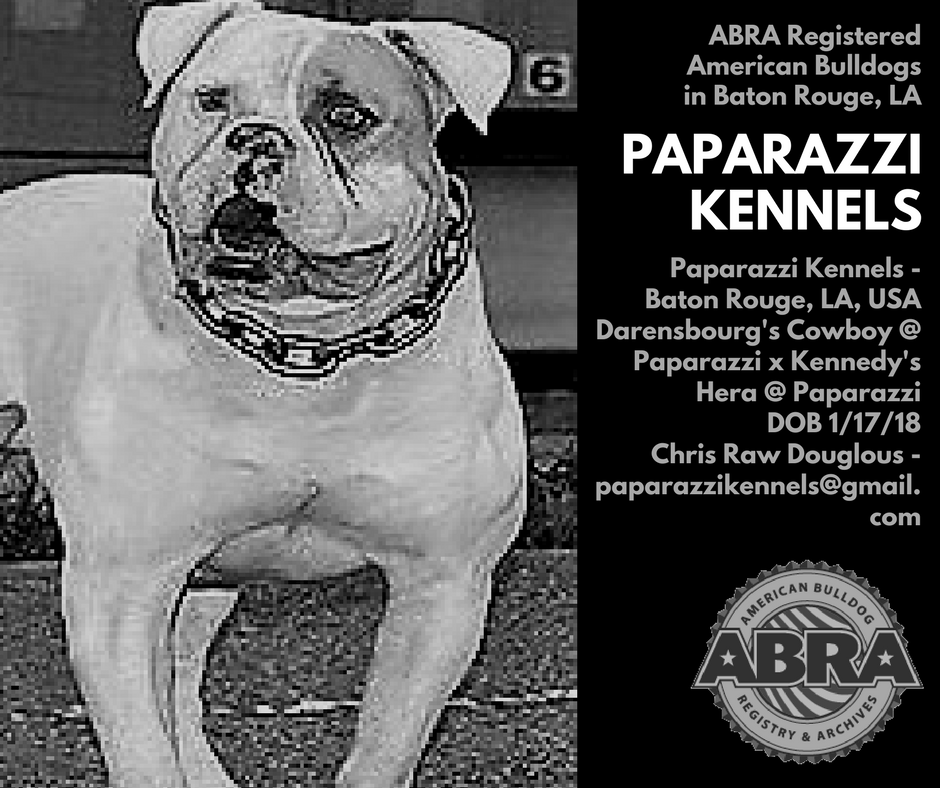 Pin by American Bulldog Registry & Archives on American
