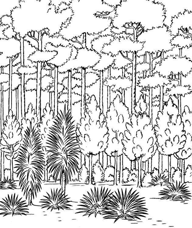 Dibujos para pintar de árboles. Dibujos para colorear de árboles ...