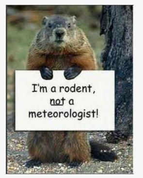 Funny Groundhog Pictures : funny, groundhog, pictures, Guillot, Made.me.laugh., Happy, Groundhog