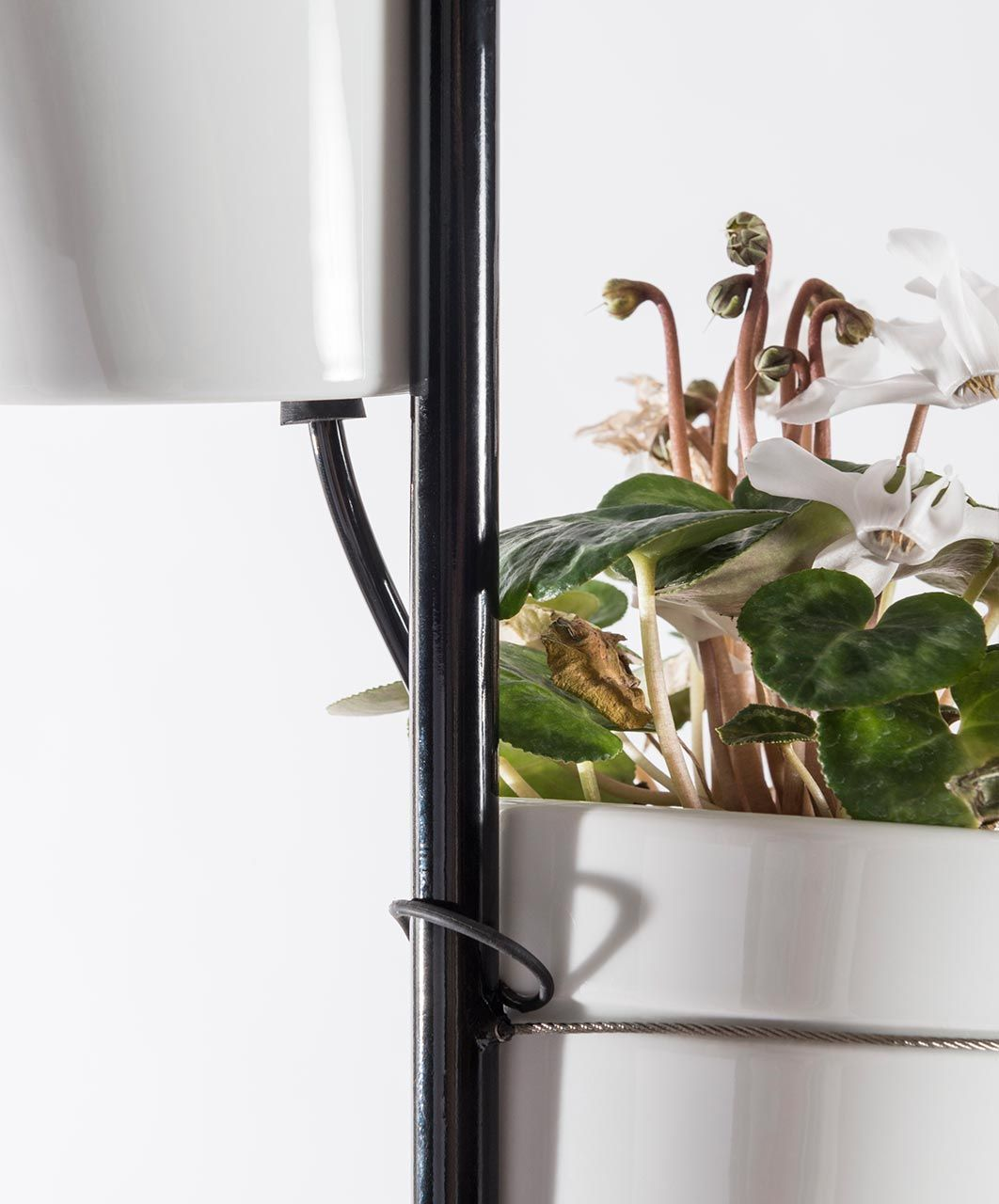 Through Window Love At First Sight >> Window Garden By Danese The Self Growing Plant Stand B E S T