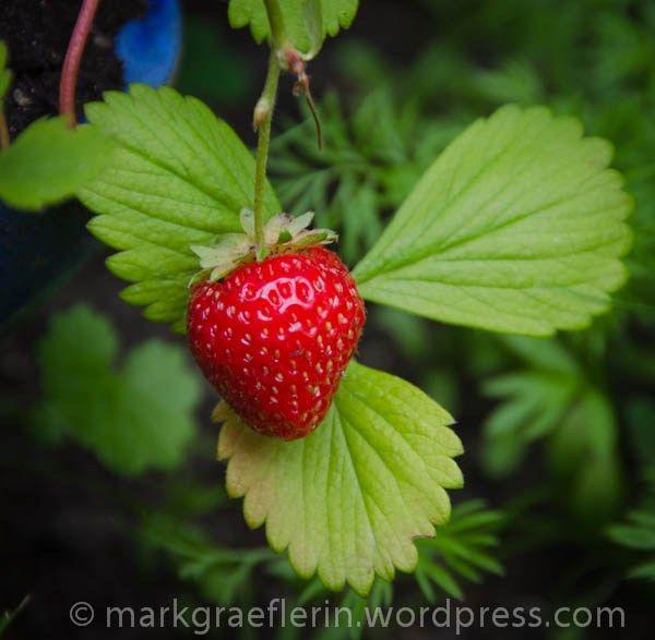 Aus meinem Garten: Anfang Juli