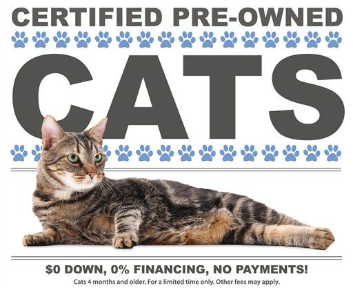 Marketing 101 Humor And Style Sells Even With A Tough Market Dog Insurance Cats Animal Shelter