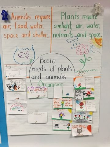 Basic Needs of Plants and Animals | Perfect introductory ...