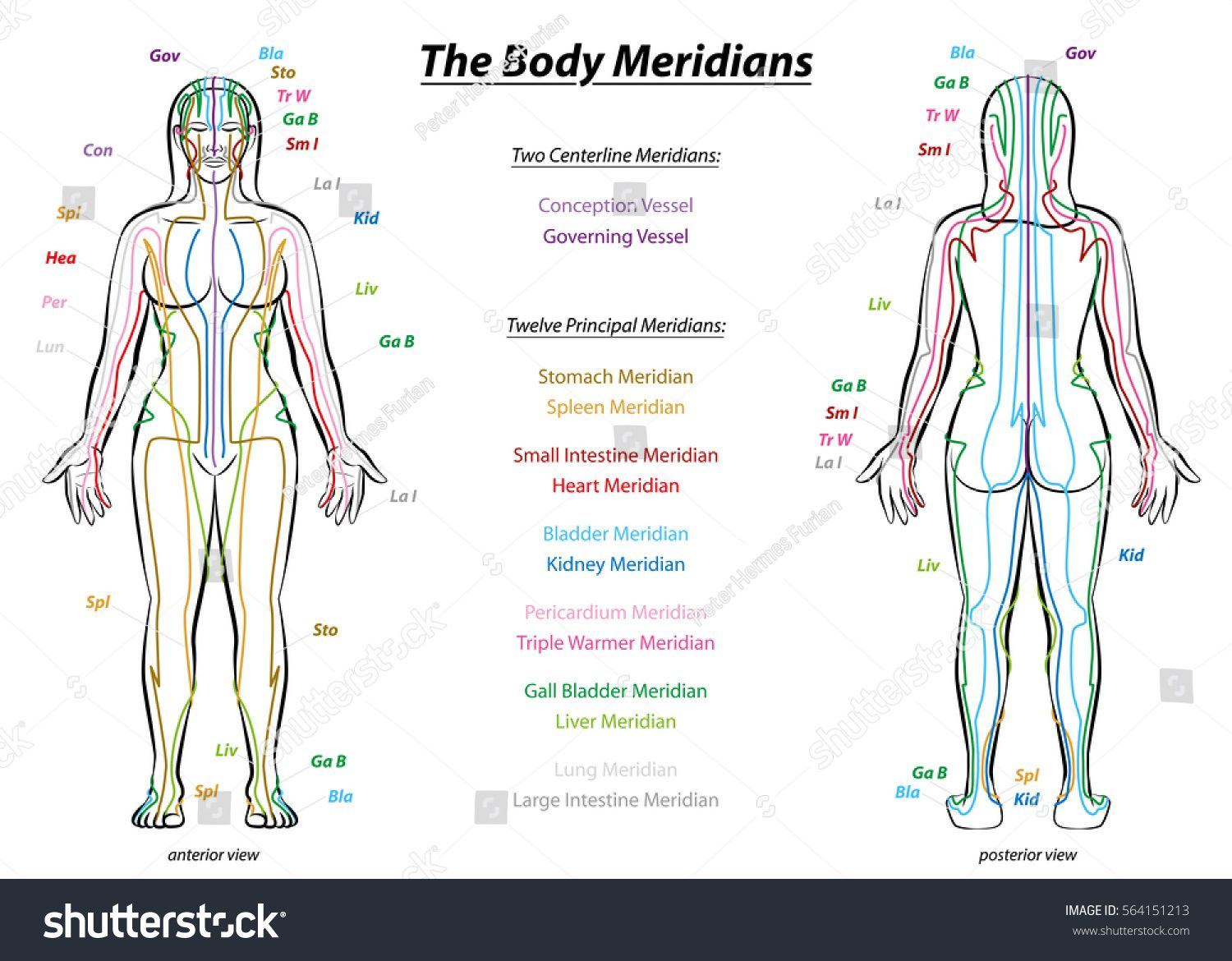 Chinese Meridian Diagram  introduction to traditional chinese medicine and meridians