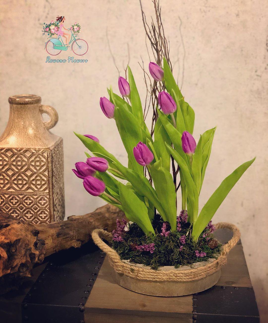 R A W A N A F L O W E R S On Instagram زهور التوليب الجميلة من ألطف وأنعم الزهور الطبيعية Rak Raku Flowers Planter Pots Flower Designs