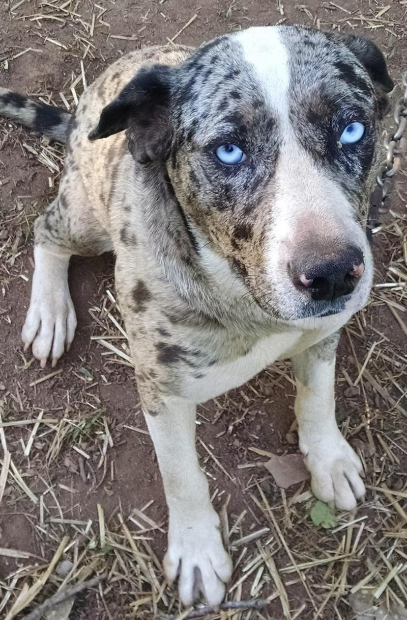 Adopt PEPPER ADOPTION PENDING on Dogs, Homeless dogs