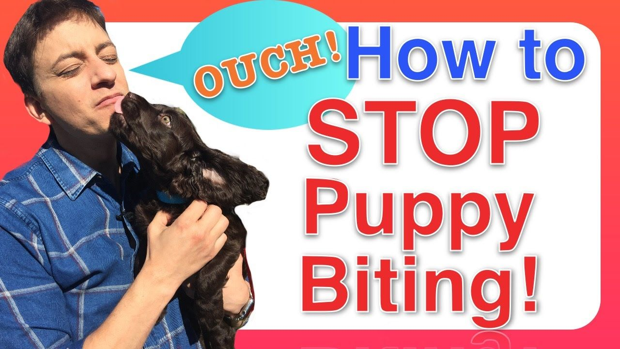 How to Train a PUPPY to STOP BITING Puppy training, Stop