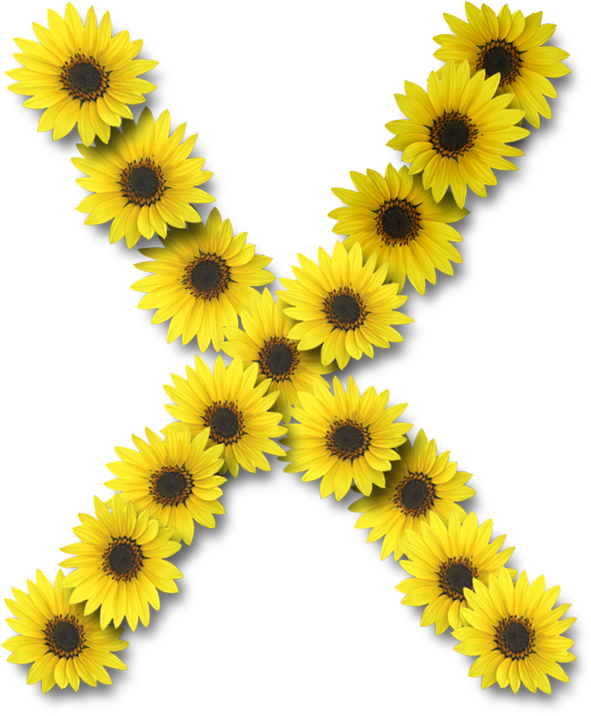 Alfabeto sunflowers .....X