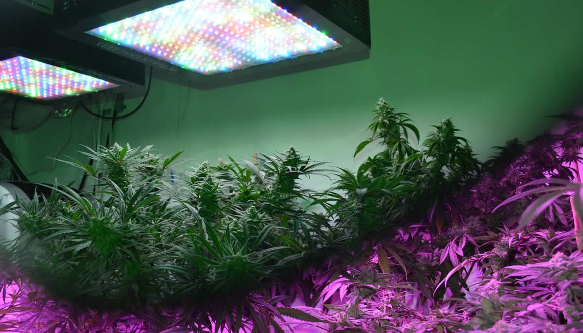 Full Spectrum Led Grow Lights Reviews 1000W Led Grow 400 x 300