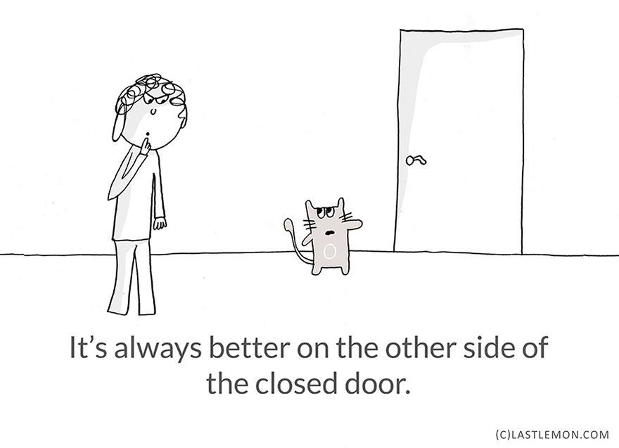 Cats have some wisdom too :) #cats
