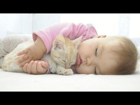 Cute cats love for babies https://www.youtube.com/watch?v=_gjnLR4DA8k