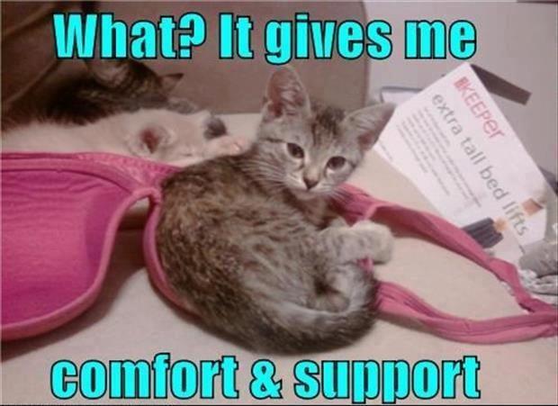 Cute kitten in a bra