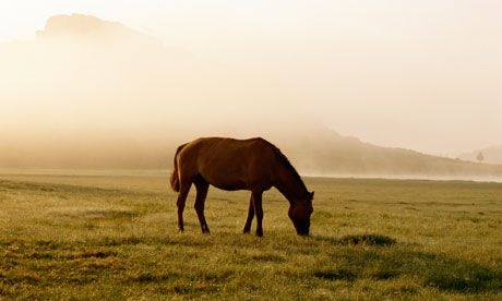 bucket list : Backpackers' diaries: horse riding in Mongolia