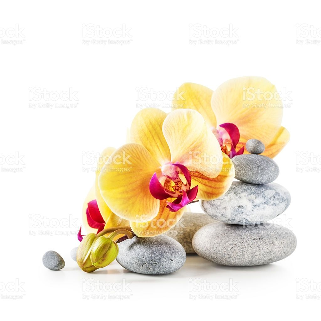 Yellow Orchid Flowers And Spa Stones Isolated On White Background