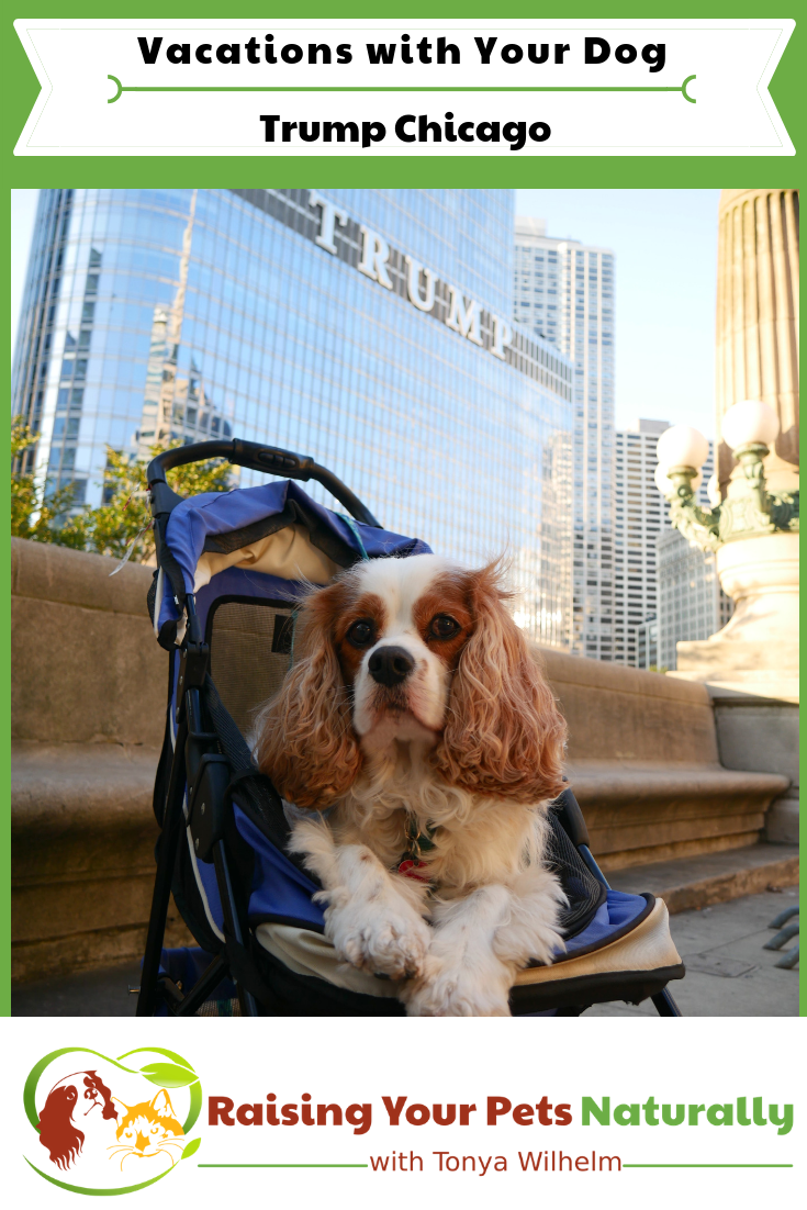 Pet Friendly Luxury Hotels In Downtown Chicago Raising Your Pets