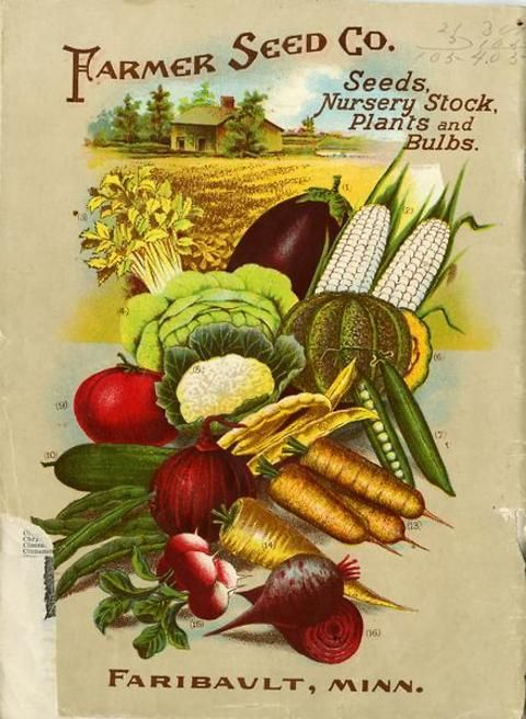 Veggie lovers in 1909 were treated to a delightful collection of colorful specimens on the back of the Farmer Seed & Nursery catalog from spring of that year.  The images included mouthwatering celery, eggplant, musk melon, carrots, tomatoes, lettuce, corn and much, much more.   Farmer Seed & Nursery originated in Faribault, MN in 1888. Andersen Horticultural Library hosts a collection of vintage Farmer Seed & Nursery catalogs.