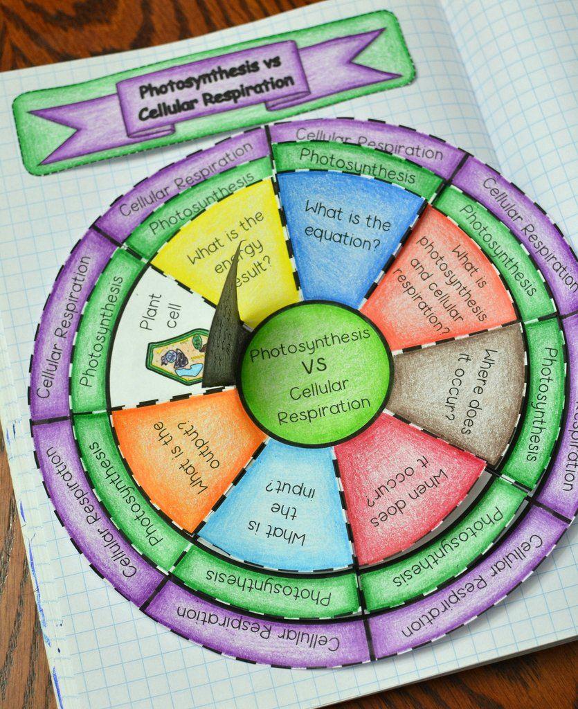Photosynthesis vs Cellular Respiration Wheel Foldable