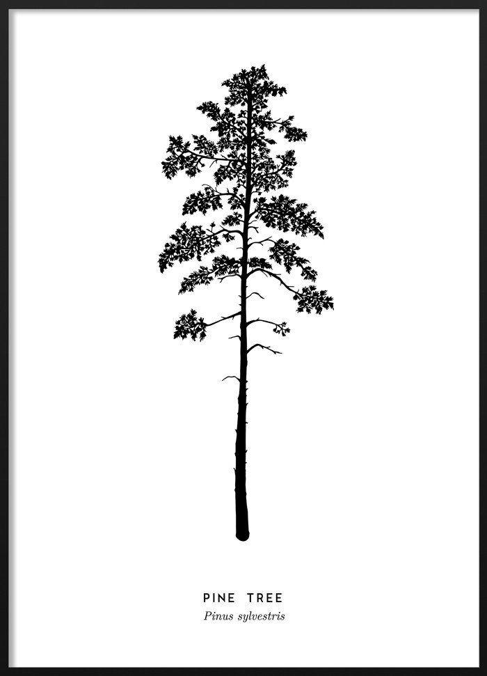 Pine Tree Poster Blackandwhite Scandinavian Illustration Poster Tavelvagg