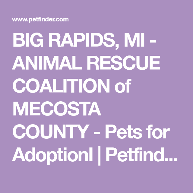 Get To Know Animal Rescue Coalition Of Mecosta County Shelter