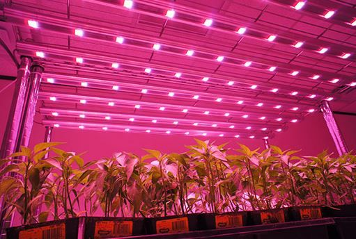 The current trend of LED growing has only continued to grow over the last year. With the technology advancing at such a high rate, it's now in everyone's best interest to start growing with LED panels instead of your traditional high pressure sodium or metal halide HID setup. In fact, we uncovered five outstanding benefits [...]