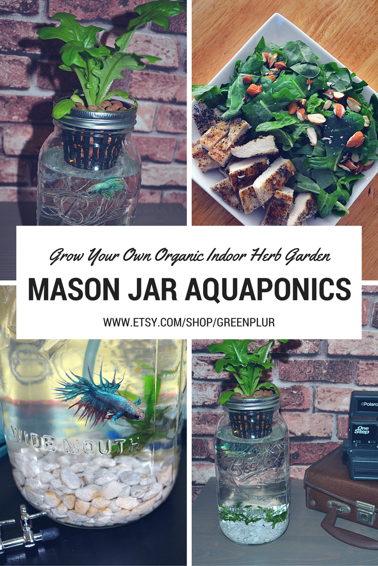 you can grow your own organic salad greens or herbs using mason