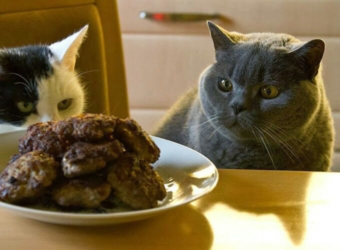 Good appetite ♡♥♡♥♡ | I love cats, Cats, Animals