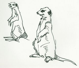 Draw Meerkats Sketches Drawing Sketches Drawings