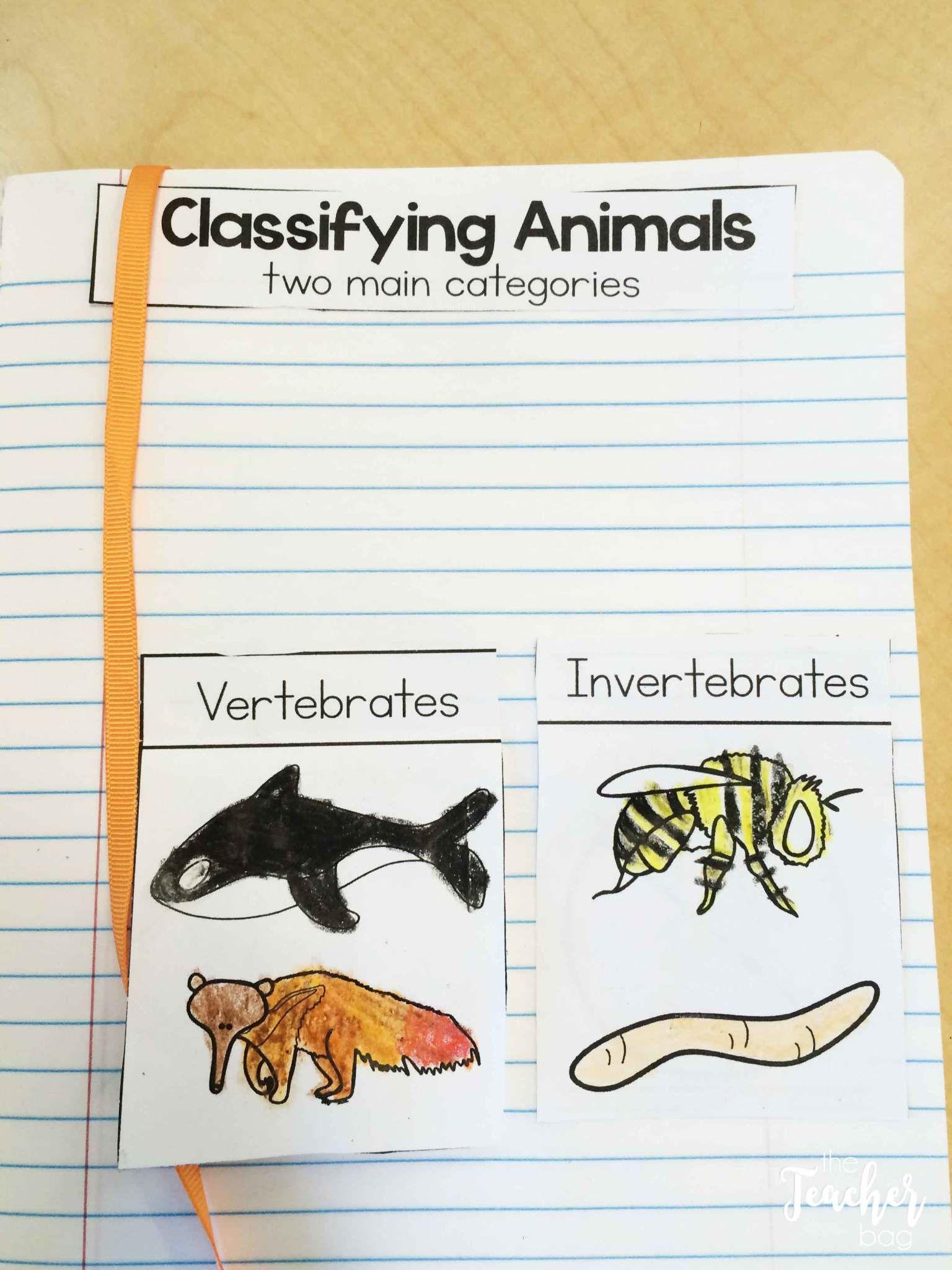 Animal Classification The Teacher Bag Animal Classification Animal Classification Activity Classifying Animals [ 2048 x 1536 Pixel ]