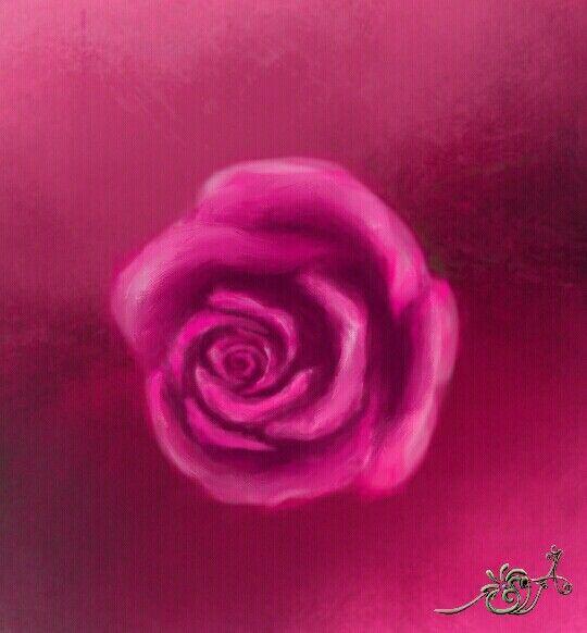 وردة الجوري فوشية Rose Plants Flowers