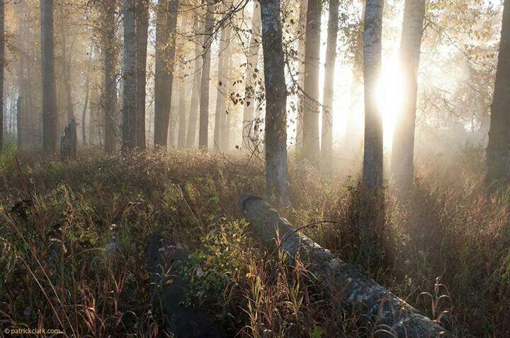 Cottonwood fog, Missoula MT