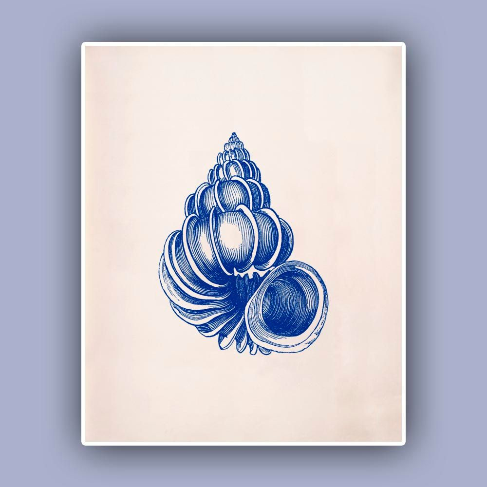 Blue Print Wall Decor : Seashell print wentletrap sea shell blue