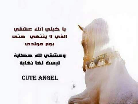 Arabian horse❤