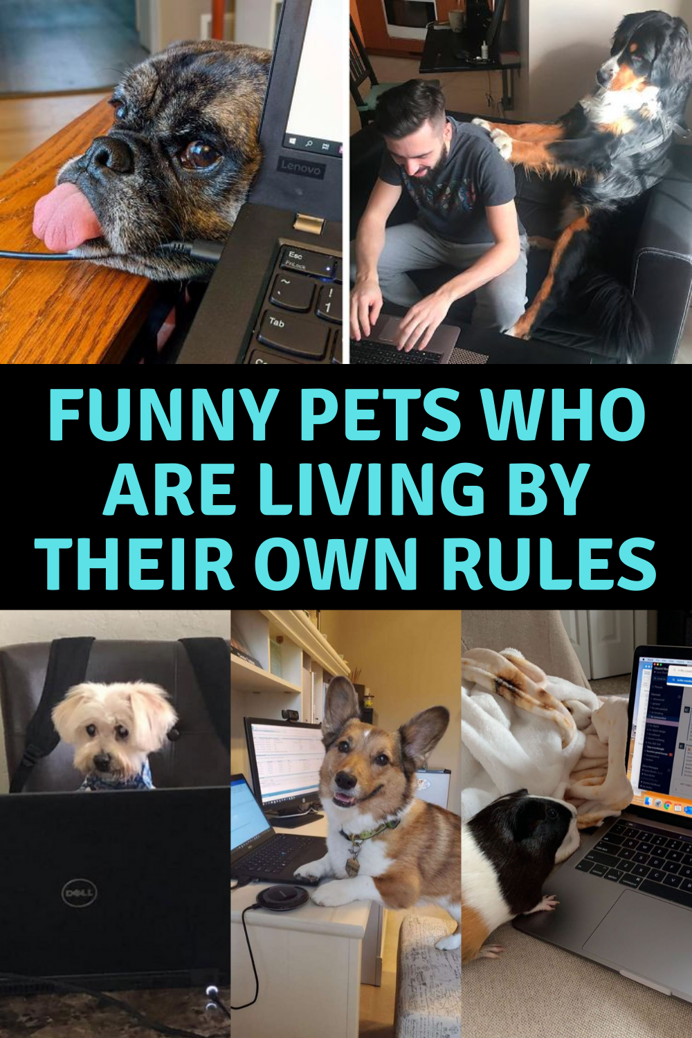 40 Pets Who Have Their Own Kind Of Logic In 2020 Funny Animals Pets Funny