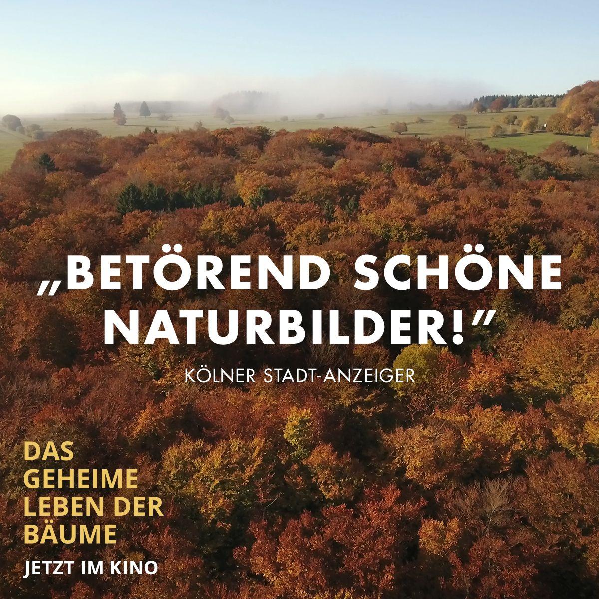Pin Von Constantin Film Auf Das Geheime Leben Der Baume In 2020 Constantin Film Leben Naturbilder