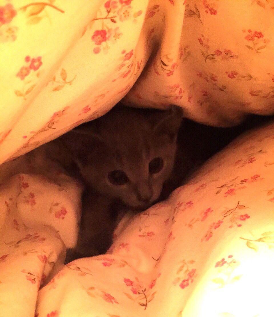 Got yourself a comfy cave!? 10/30/2014